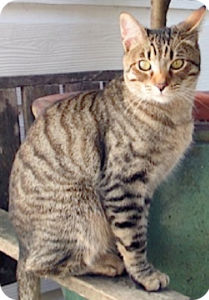 Briar cat 2